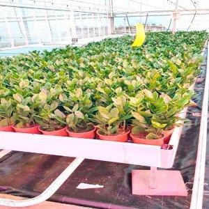 Riscaldamento a infrarossi per il settore agricolo con GRID - Risultati dei test